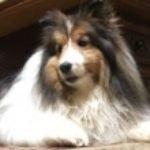 Profile picture of nataliedaniel